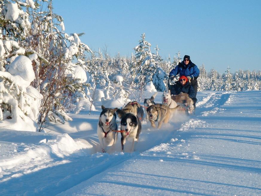 Fernweh_Nordic-Holidays_Huskytem-bei-Gllivare--F-Barbara-Willem_web