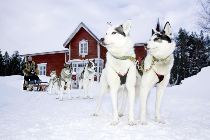 Fernweh_ranua-wildlife-huskies-rovaniemi-3_web