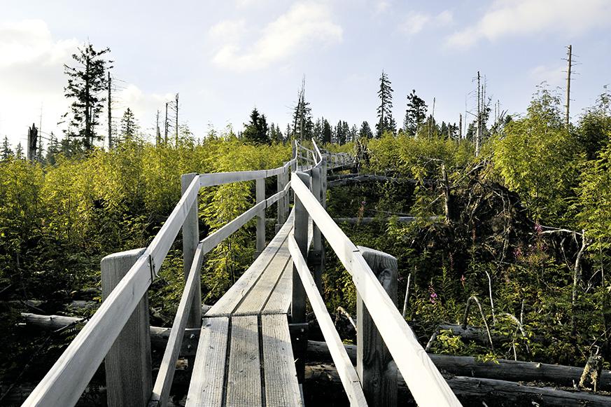 Verschiedene Sujets vom Gäggerweg über den Sturmwurfwald (Lothar) am Gägger.