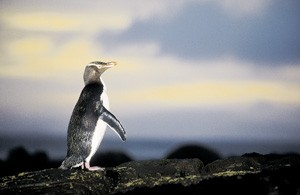 fernweh_ozeania_pinguin_web